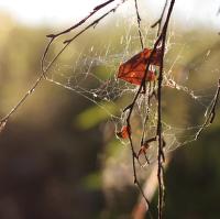 Lapen v pavučině snů