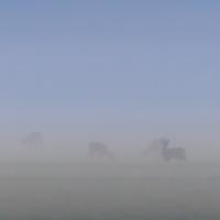 Ranní pastva