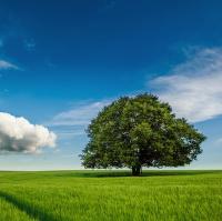 Strom v poli...