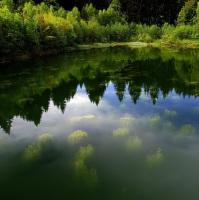 Lesní jezírko v Javořích horách