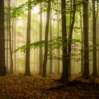 Podzimní ticho...