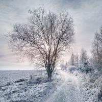 Zimní ráno na Vysočině