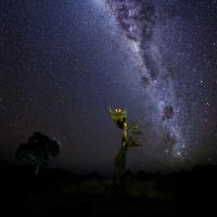 Hnízdo čápů Jabiru   Pantanal
