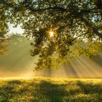 Svítaní v sadech