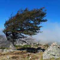 Korsické větry