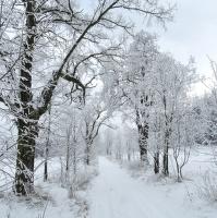 Cestou sněhovou.