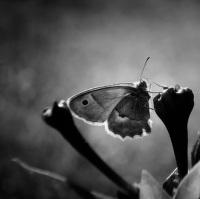 Motýl,tož tak