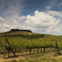 Toskánsko-vinice v regionu Chianty