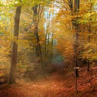 Podzimek v lese...