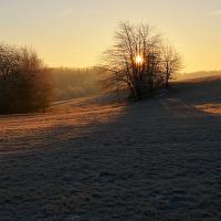 Slunce ve křoví.....