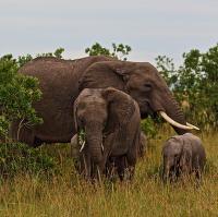 Rodinka na procházce v Masai Mara
