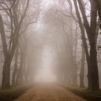 Mlhavou cestou