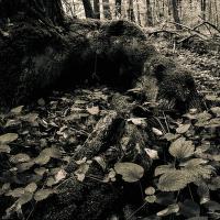 Lužní les XX - Přírodní rezervace Polanský les