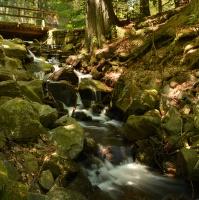 vyschlý potok boubínského pralesa :-(