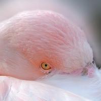 Růžová.-)