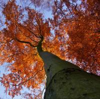 Pod stromem