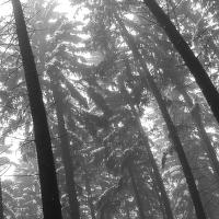 Křivej les
