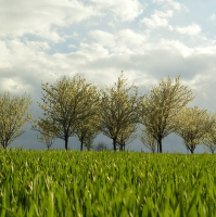 Pole na jaře
