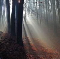 Lesní paprskování