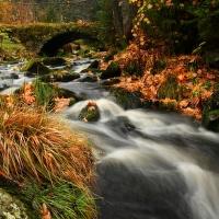 Filipohuťský potok v podzimním šatu