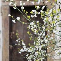 Jaro a pražská zákoutí