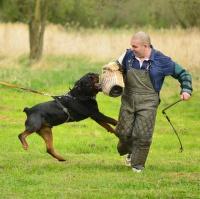 výcvik se psy - zákus do rukávu