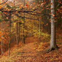 Lesní cesta.