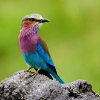 létající paleta barev