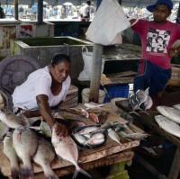 Fishmarkt v Negombu V