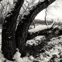 Lužní les XXI - Přírodní rezervace Rezavka