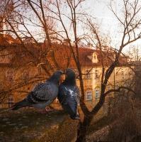 Večerní romance nad Čertovkou