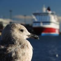 Helsinki - přístav