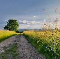 Cestou ne cestou, polem ne polem ...