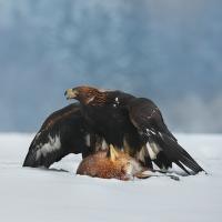 lov v zimě