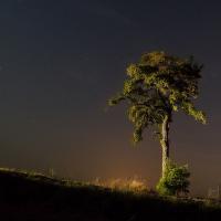 Svítící strom