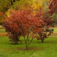 Děštivý podzim v parku