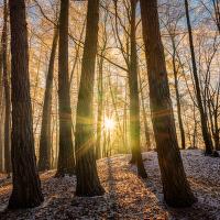 Lesní paprsky