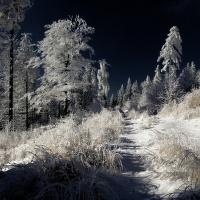 Zima v Javořích horách