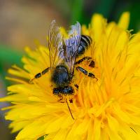 Pracovitá včela