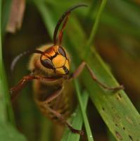 Do hmyzí říše