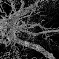 lišejníkový strom