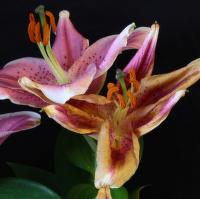Pomíjivá krása květin.