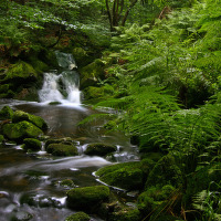 Zelený ráj