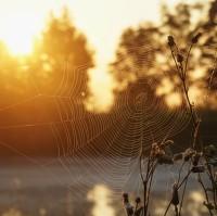 Pavučina při svítání