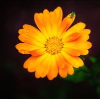 Květina s broukem