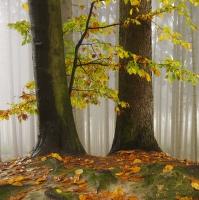 Podzim na Ostaši