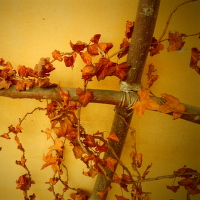 podzim na dosah