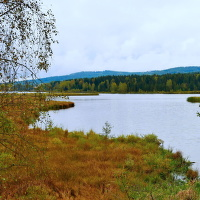 Dolejší Padrťský rybník v Brdech