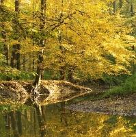 Lesní jezero IV.