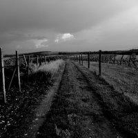 Vinohrad..